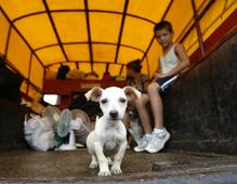 Reuters_dog_219_tcm25-5625