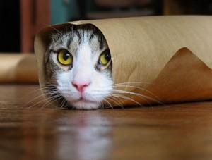 42_cats_43506