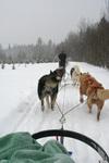 Dogsled2
