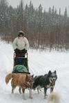 Quebecdogsled