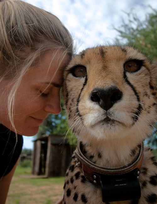 Cheetahb